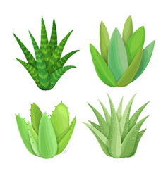 Isolated succulents on white background vector
