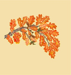 Branch of oak with leaves and acorns autumn theme vector