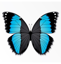 blue and black butterfly vector image