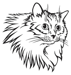 Cat furry mane vector
