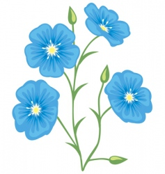 Flower of flax linum usitatis vector