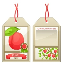 Sale tag of seedlings peach trees instructions vector