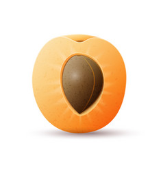 Half apricot fruit vector