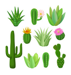 Cacti and succulents with flowers vector