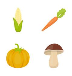 corn corn vitamin carrots with tops pumpkin vector image