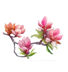 Watercolor summer blooming pink magnolia flowers vector