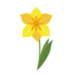 Narcissus flower spring season vector