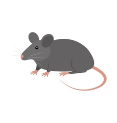 Rat animal isolated icon vector