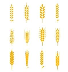 Ears of wheat bread symbols vector image
