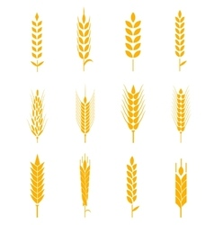 Ears of wheat bread symbols vector image vector image