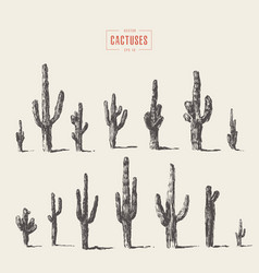 set of cactuses hand drawn ink vector image vector image