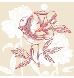 One peony on background vector