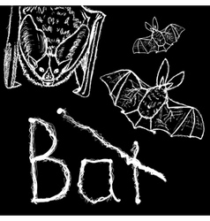 Bats Hand drawn whitw silhouettes vector image vector image
