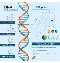 Dna Infographics Set vector image