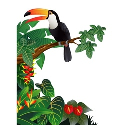 Toucan bird in the tropical forest vector