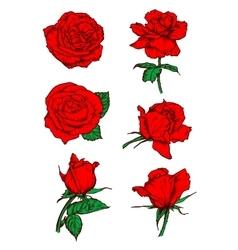 Red roses buds icons Flower sketch emblem vector image
