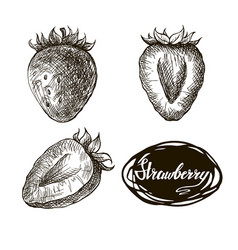 strawberry hand drawn vector image