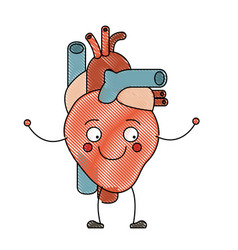 Color crayon silhouette caricature circulatory vector
