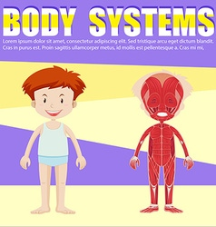 Infographic of boy and body diagram vector