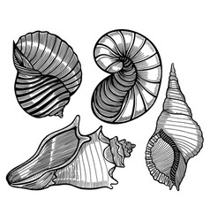hand drawn set of various seashell vector image
