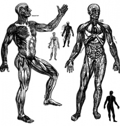 anatomical drawings vector image