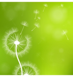 Dandelion with seeds vector