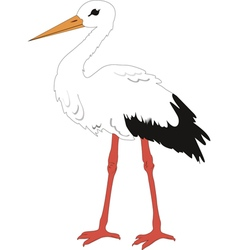 The Stork vector image