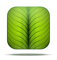 Leaf Square Icon vector image