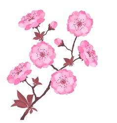 Branch with cherry flowers on white background vector image vector image