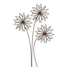 monochrome silhouette with daisy flower vector image