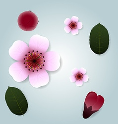 Set of cherry blossom and leaf vector