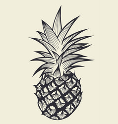 pineapple fruit hand drawn vector image