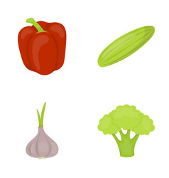 red sweet pepper green cucumber garlic cabbage vector image vector image
