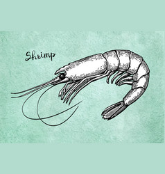 shrimp ink sketch on old paper vector image vector image
