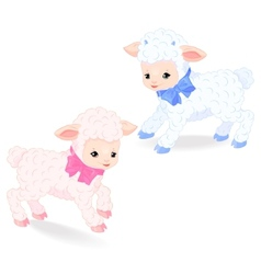 Little lambs vector image