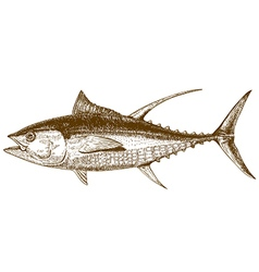 Engraving tuna vector