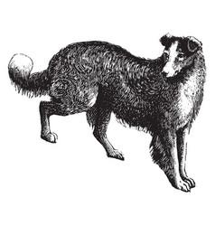 Dog vintage vector