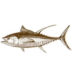 engraving tuna vector image vector image