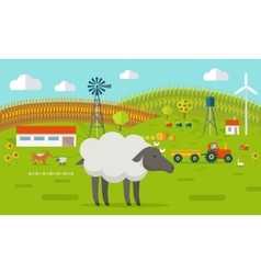 Sheep on Farmyard Concept vector image vector image
