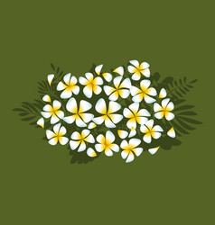 White plumeria flowers in simple elegant style vector