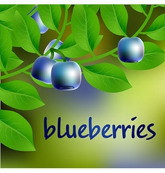 Blue-black juicy sweet blueberry on a branch for vector