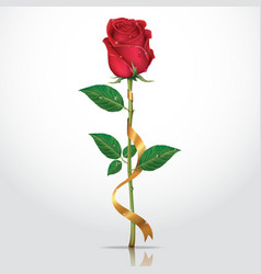 Beautiful red rose with gold ribbon vector image vector image