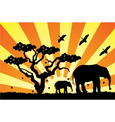 elephants in Africa vector image