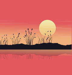 silhouette of lake with coarse grass landscape vector image vector image