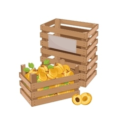 Wooden box full of apricot isolated vector