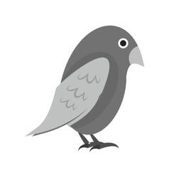 Pet bird vector