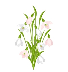 Bouquet of flowers snowdrops on white background vector