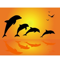 dolphin silhouettes vector image vector image