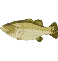Image of fish on a white background vector