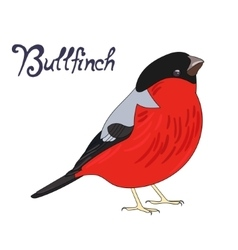 Bird bullfinch vector